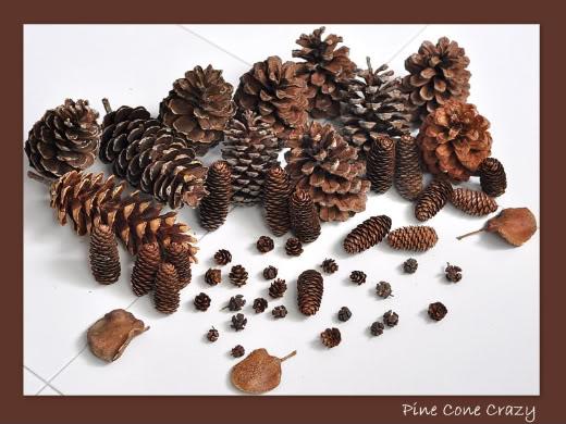 Lovin' Them Pine Cones