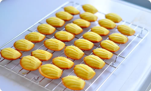 Lemon Madeleines