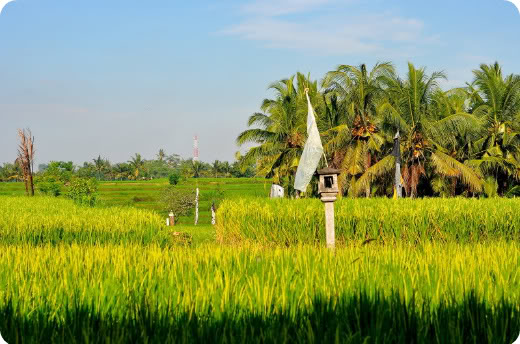 Bali: From Ubud With Love
